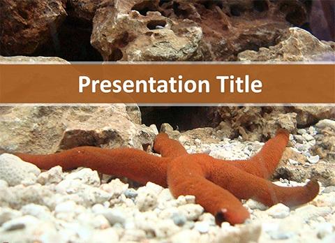 پاور پوینت ستاره دریایی