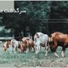 تمپلیت پاورپوینت شرکت کشاورزی