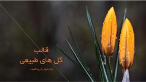 قالب- پاورپوینت- گل- های- طبیعی